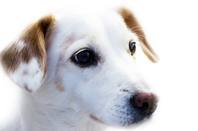 How To Cure Mange In Dogs