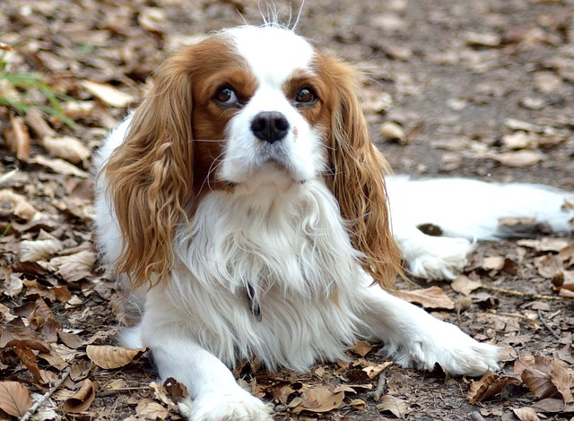How To Cure Ringworm In Dogs