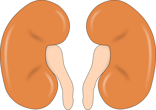 Kidney Disease: Symptoms, Causes, Treatment and Prevention
