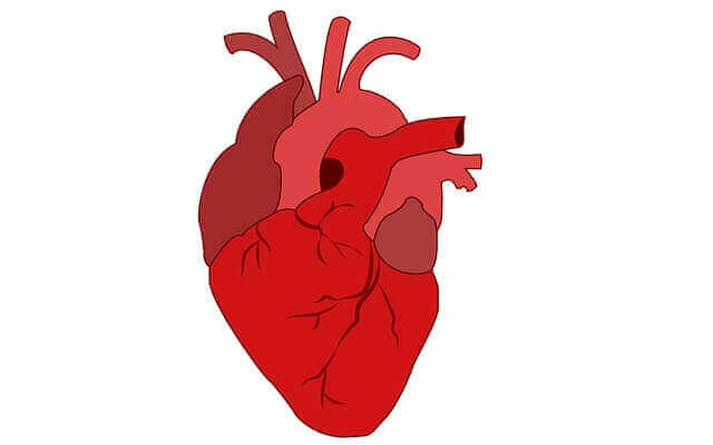 Enlarged Heart Symptoms