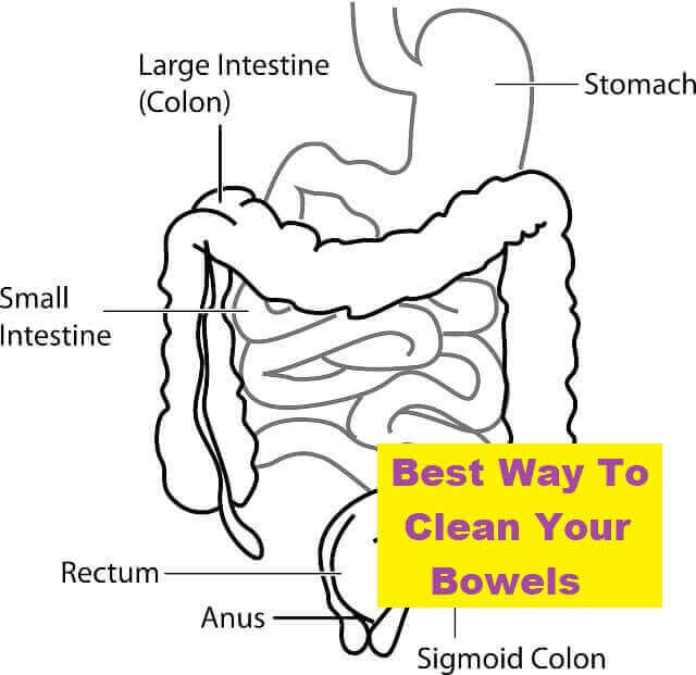 Best Way To Clean Your Bowels