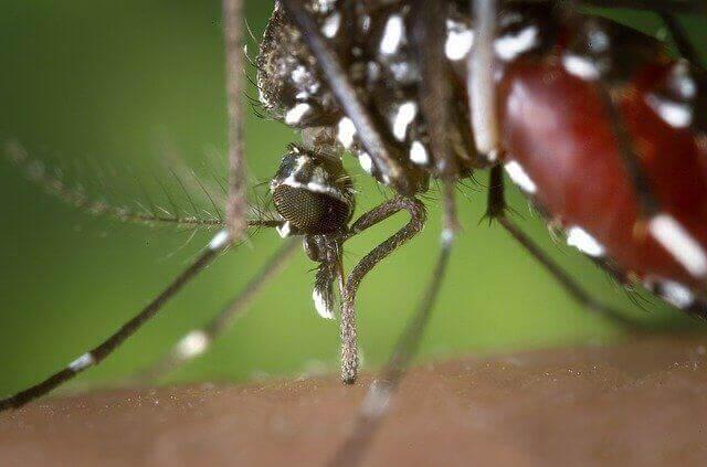 West Nile Virus Transmission