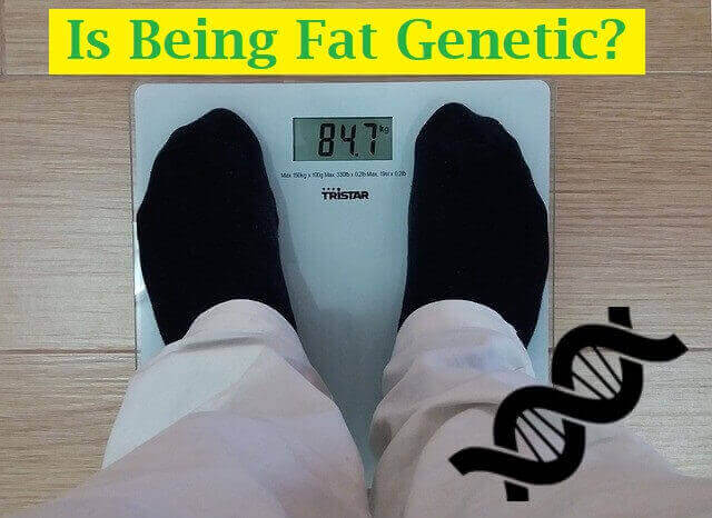 Is Being Fat Genetic