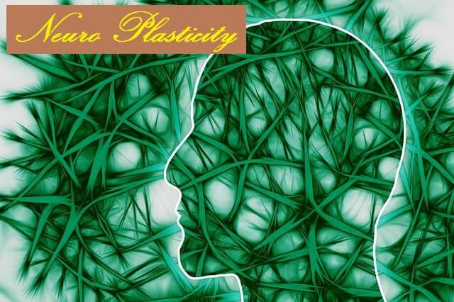 Neuro Plasticity / Neuroplasticity