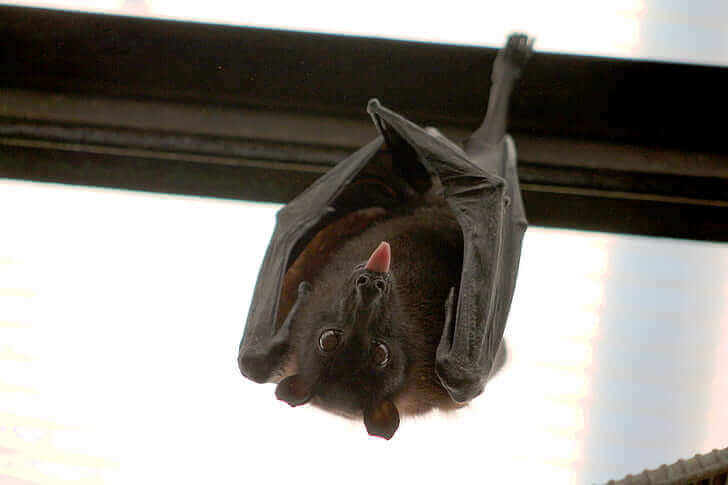 How To Get Rid Of Bat In House